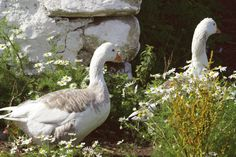 Goose House, Rabbit Tale, Spring Aesthetic, Green Life, Months In A Year, 12 Months, Farm Life, Country Life, Old Things