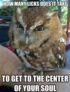 Evil Owl Meme