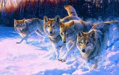 Wolves  in snow  at  night
