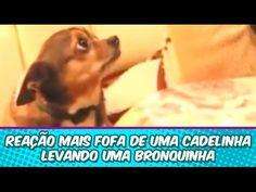 Reação fofa de uma cadelinha levando bronca