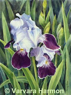 Irises, Watercolor painting by Varvara Harmon