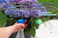 Comment Se Débarrasser des Pucerons ? L'Astuce Révélée Par un Jardinier.