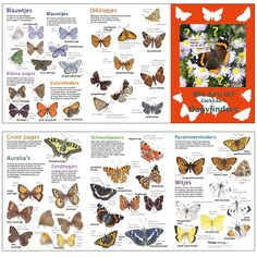 per 5 Nature Journal, Animals Of The World, Life Is Beautiful, Biology, Flora, Infographic, Wildlife, Butterfly, Activities