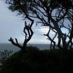 ì Lanima della #Sardegna.Terra mia non scordare, impara, disegna e migliora.