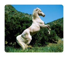 Beautiful Animal Mouse Pad White Horse Wild