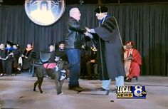 From our sister site, Pet360: Service Dog Accepts Posthumous College Degree For Owner  Josh Kelly, who lived with epilepsy, was finishing up his final semester at Idaho State, but  he died in February before he could achieve his life-long dream. What the school did in response will warm your heart. Click the link to read more.