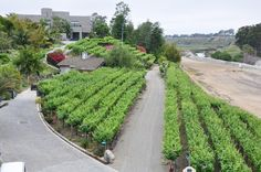 Did you know that Newport Beach has its own Vineyard? Spectacular wine right here!