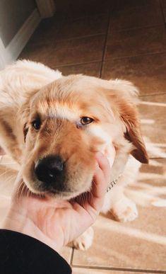 Super Cute Puppies, Cute Baby Dogs, Super Cute Animals, Cute Dogs And Puppies, Cute Little Animals, Cute Funny Animals, Doggies, Cute Dog Wallpaper, Tier Fotos