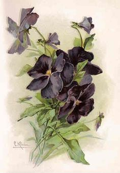 Catherine Klein---notice the gray shading around the flowers (entire picture)