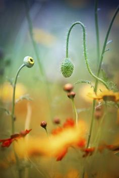 Stephen Moore decided to get right down in the undergrowth when photographing a poppy field in the Cheshire countryside