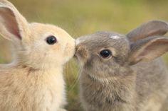 bunny kiss.