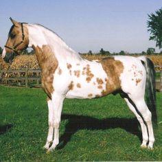 razas de caballos - Taringa!