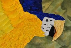 Blue & Yellow Macaw Detail 02
