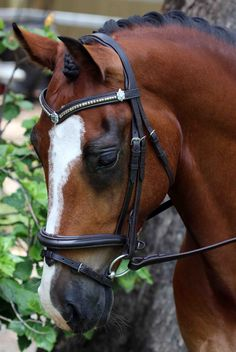 Flexi-Fit English Leather Mix & Match Gel Bridle in Dark Havana & Stainless Steel. Stainless Steel Clincher V Shaped English Leather Flexi-Fit Gel Padded Browband With Shields & Converter Eventer Raised English Leather Flexi-Fit Gel Padded Snaffle Noseband
