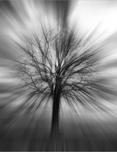 'Winter Tree' by Rick Schwartz via 500px