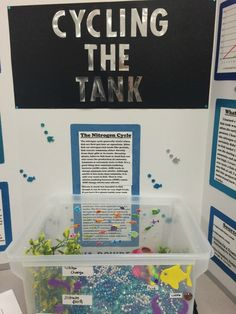 """The words """"Science Fair"""" can strike fear in the heart of parents, but here are over 75 Science Fair ideas to take the sting out of the project Kids Science Fair Projects, Science Experiments Kids, Science For Kids, Nitrogen Cycle, Affirmations For Kids, Romantic Mood, Mad Science, Middle School Science, Project Ideas"""