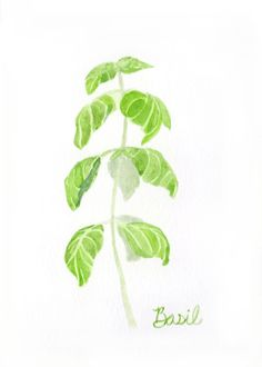 5 x 7 Basil - Herb Watercolor Print  This is a digital print of a watercolor I painted of a sprig of basil. Basil is my favorite herb, and I had a