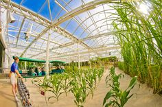 The Behind the Seeds at Epcot is a guided one-hour tour through The Land pavilion greenhouses that house the Living with the Land attraction at Epcot.