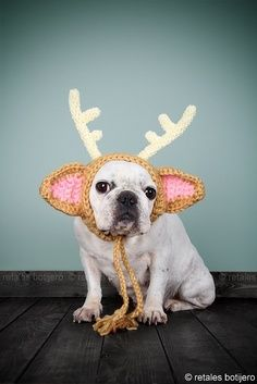 french bulldog Reindeer Baby
