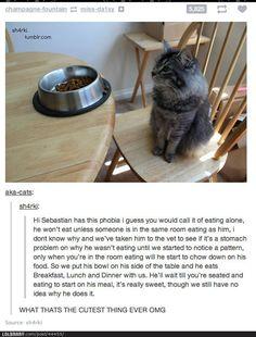 I love this cat! <3