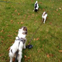 heididahlsveen:  #atsjoo, Marly og Kira #byhund #dogs #hunder
