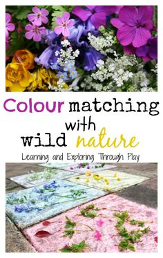 color matching with nature - preschool or art/science with elementary and middle school