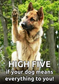 If I have to give a high five if my dog means everything to me, I would never stop giving high fives.