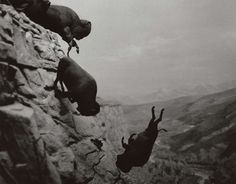 Untitled (Falling Buffalo), 1988-89 © the Estate of David Wojnarowicz, Courtesy P.P.O.W Gallery, New York