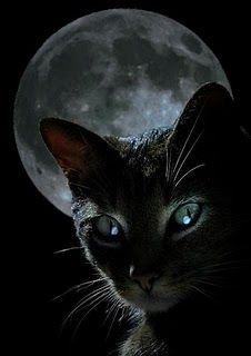 "* * > The cat, the beautiful cat, shall endure, endure."""