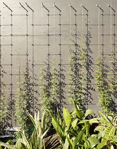 wire trellis on wall, vines, modern trellis