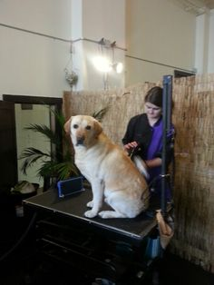 Labs know how to enjoy a dog spa
