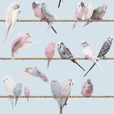 Lovebirds wallpaper - Sky blue by Koziel   EURO37/10m roll