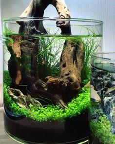 Aquarium Mopani Wood Decoration Natural Hide Away Approx 11 X 5 Inches Reptiles