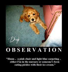 Observation Motivational Posters