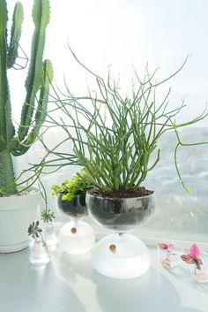 Growing plants in the kitchen by Judith de Graaff