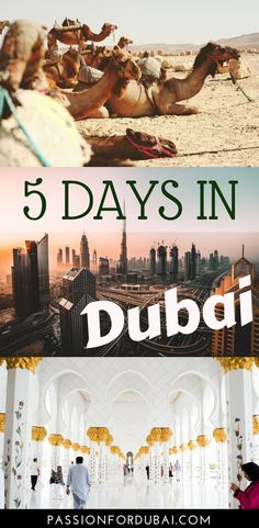 Planning to spend 5 days in Dubai, one of the most unique cities in the world? Check out our ultimate Dubai itinerary on what to see and do. Dubai Guide, Dubai Travel Guide, Dubai Vacation, Dubai Trip, Dubai Information, Dubai Things To Do, Visit Dubai, Asia Travel, Eastern Travel