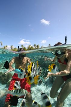 Diving underwater in a Coral Reef, Tahiti