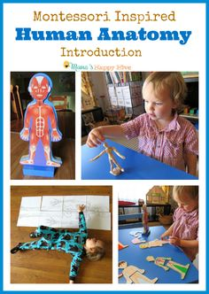 Fun activities for a Montessori human anatomy introduction with toddlers and preschoolers. This post is part of the 12 Months of Montessori series.