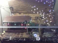 my frog's luxurious habitat