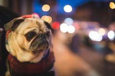Truckers And Their Dogs| Sunbelt Finance