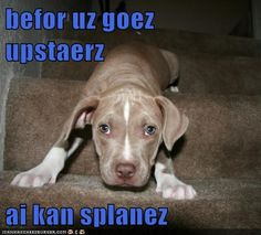 I Has A Hotdog - pitbull - Page 6 - Loldogs n Cute Puppies - funny dog pictures - Cheezburger