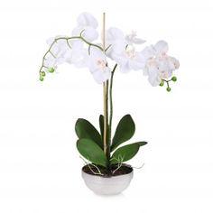 Stroik Royalorchid