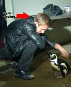 Ryan Gosling and a penguin :)