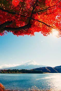 earthyday: Autumn Sunshine © Larga Trần