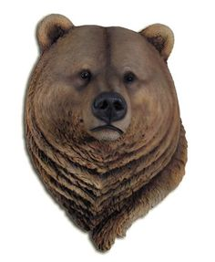 California brown bear s large bust