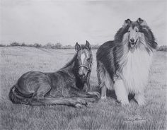 New for 2016! A beautiful sable rough Collie watches over a foal in this new giclee print from my original graphite pencil drawing Kindred Spirits. This giclee print is captures the intricate detail of the original drawing, is individually created with archival ink on fine art paper, and is signed and numbered. This print measures 13 x 16 with an image size of 11 x 14. The edition is limited to 200 and each print includes a certificate of authenticity.  I ship worldwide with secure…