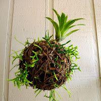 How to Make a Rainforest Drop! #diy