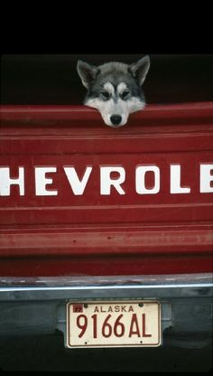 Skagway, Alaska, 1977. What's not to love? A dog, a truck and up north!!
