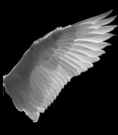"""The reason birds can fly and we can't is simply because they have perfect faith, for to have faith is to have wings. Barrie, The Little White Bird Angel Wings Png, Bird Wings, Wings Drawing, White Wings, Angel Art, Dark Art, Pet Birds, Art Reference, Photoshop"