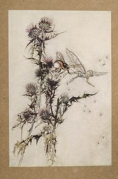 Arthur Rackham illustration from A Midsummer Night's Dream - Kill me a red hipped humble bee on top of a thistle Arthur Rackham, Dream Illustration, Botanical Illustration, Le Kraken, Humble Bee, Dream Images, Scrapbook Blog, Midsummer Nights Dream, Fairy Tales